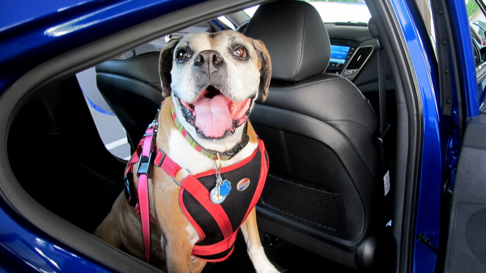 BarkBuckleUp Announces Top Ten Pet Friendly 2012 Vehicles