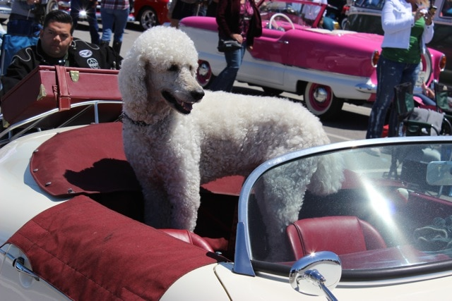 Sweet Dogs and Specialty Cars of the Seal Beach Classic Car Show