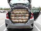 2015 Honda Fit Rear Hatch Capacity Ikea Swedish Meatballs
