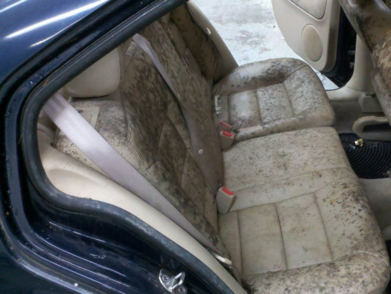 How To Get Mold Of Car Seats