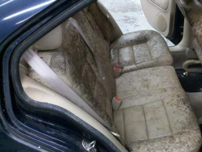Remove Mildew Smell >> How To Remove Mildew Musty Smell From Your Car Autobytel Com