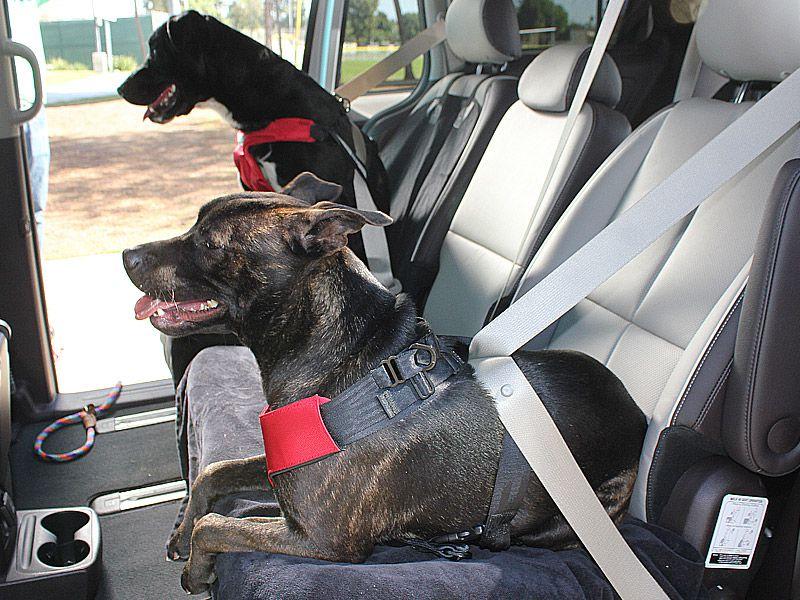 Best Car Harness Dog
