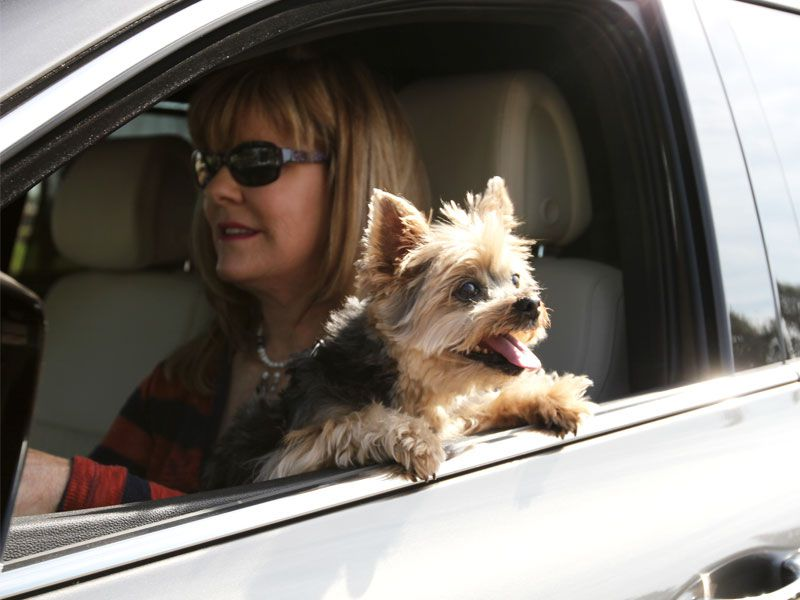 Driving With Dogs: 10 Mistakes You Didn