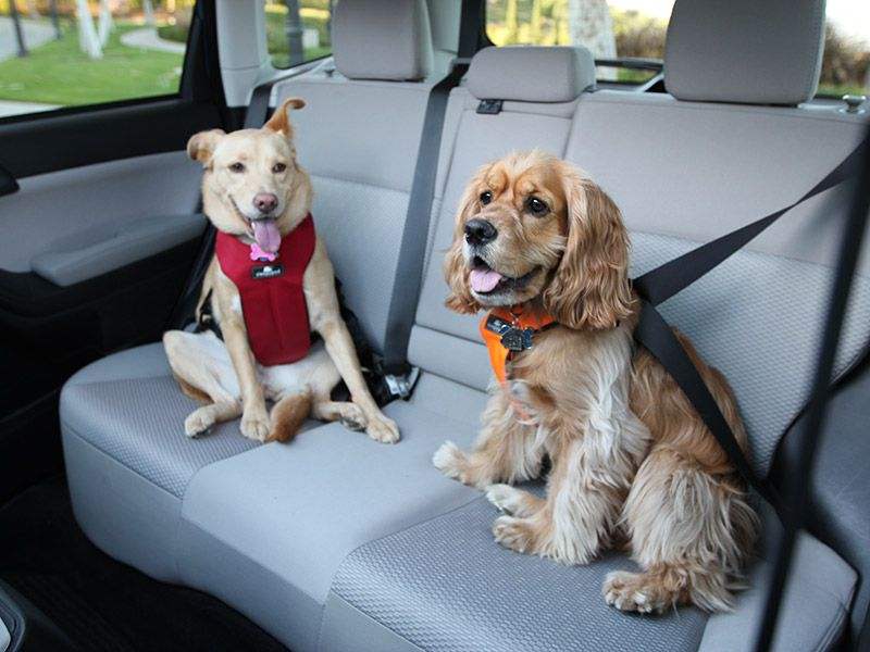 Pet Seat Belt >> Top Performing Dog Seat Belts Crates And Carriers Autobytel Com